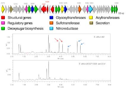 ISPA grupo de investigación Biosíntesis de compuestos bioactivos línea de investigación 1