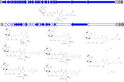 ISPA grupo de investigación Biosíntesis de compuestos bioactivos línea de investigación 3